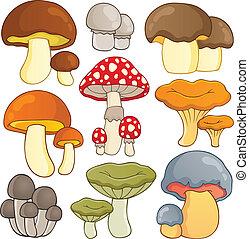 1, thème, champignon, collection