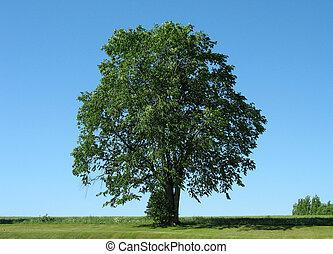 1, träd