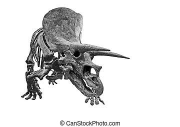 1, triceratops