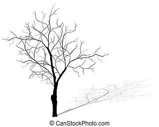 10., 木, 隔離された, 死んだ, 背景, 白