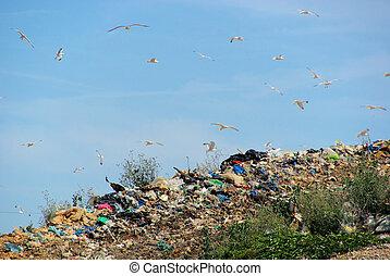 10, décharge ordures