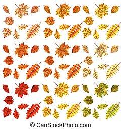 10, ensemble, coloré, leaves., eps, automne