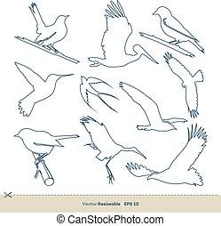 10., ensemble, oiseau, illustration, eps, art, design., gabarit, ligne, vecteur
