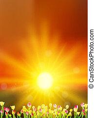 10, prado, sky., tulips, eps, contra, pôr do sol, flores