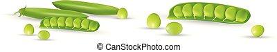 10, sätta, illustration, öppna, ärtor, pods., isolerat, bakgrund, vektor, gröna vita, eps, hel