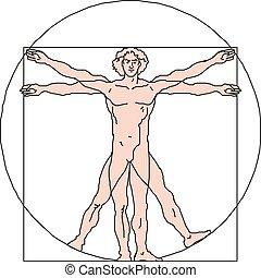 10, vitruvian, eps, illustration, vektor, man