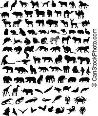 100, animales
