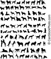 100, chiens