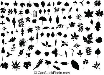 100, feuilles