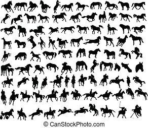 100, pferden