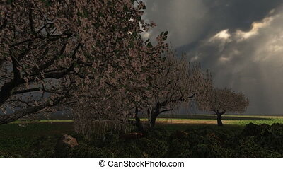 Spring Storm with Cherry Trees, Lightning. Nice prairie with time lapse clouds animation, windy. Great for seasonal spring and nature themes.