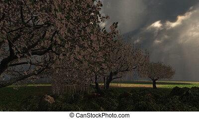 (1018), wiosna, burza, z, wiśniowe drzewa, piorun