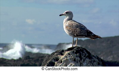 seagull with havy surf blur