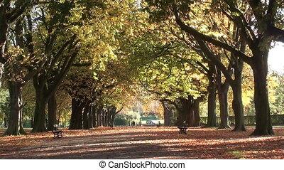 1052 autumn trees 09