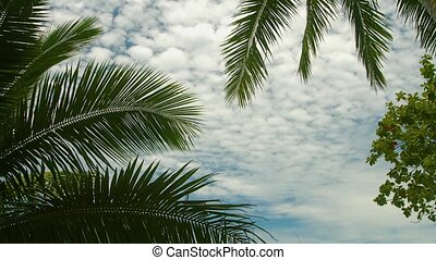 Leaves of palm trees against the sky. Exotic tropical view