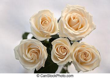 11, rose, fleurs