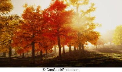 (1140), napfény, ősz, liget, piros, bitófák, délután,...
