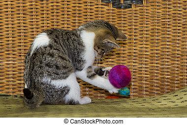 12, 주, 늙은, 고양이 새끼, 은 이다, 노는 것, 와, a, ball.