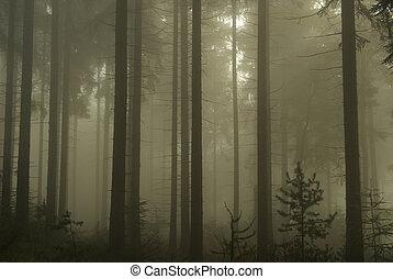 12, nevoeiro, floresta