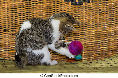 12 weeks old kitten is playing with a ball.