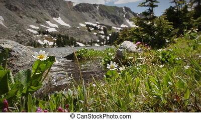 (1205), córrego montanha, wildflowers