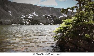 (1206) Mountain Stream Wildflowers