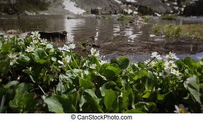 (1207) Mountain Stream Wildflowers
