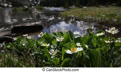 (1208) Mountain Stream Wildflowers