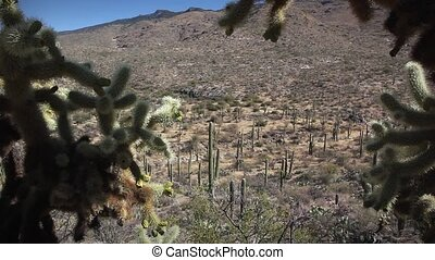 1249 Saguaro Cholla Cactus Desert - Great for themes of...