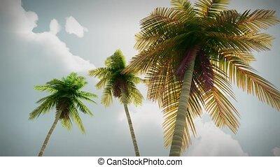 (1274) Romantic Tropical Island Sky