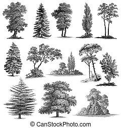 13, ensemble, vendange, arbres, main, dessiné