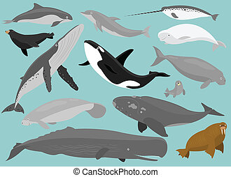 13 Marine Mammals in simplified flat vector cartoon including Porpoise, Dolphin, Narwhal, Beluga (White Whale), Sea Lion, Rorqual, Killer Whale (Black Fish), Dugong, Seal, Manatee, Whale, Sperm Whale, and Walrus