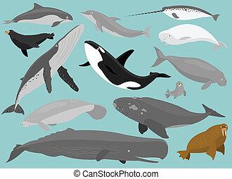 Marine Mammals - 13 Marine Mammals in simplified flat vector...