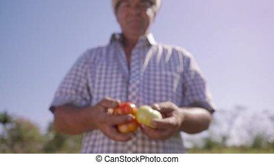 14-portrait, projection, appareil photo, paysan, sourire, tomates, homme