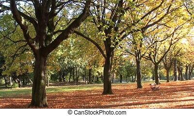 1416 autumn trees 08