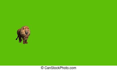 15 animated lion  approaching camera, on a green background