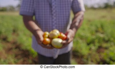 15-Man Farmer Showing Red And Green Tomatoes To Camera -...