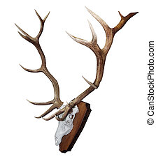 15 Point Mounted Stag Horns