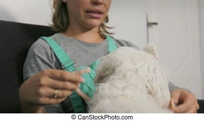 15-Woman Dog Owner Putting Flea Collar To Pet