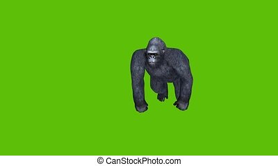 18 animated gorilla moves and attacks with green screen background