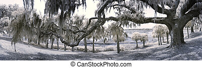 180 degree panorama of live oak and coast - 180 degree...