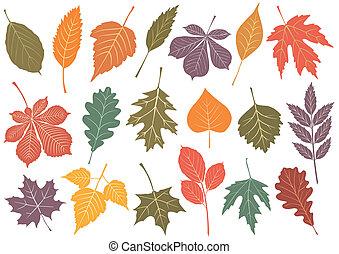 19, herfst, ector, set, illustratie