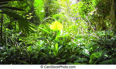 Tropical green rain forest - 1920x1080 video - Tropical...