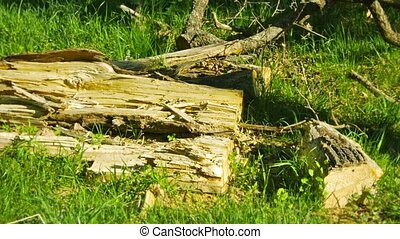 Wreckage of wood on the ground in an oak forest