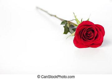 196 red rose lying on white