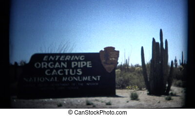 A scenic look at the organ pipe cactus national park in Arizona.