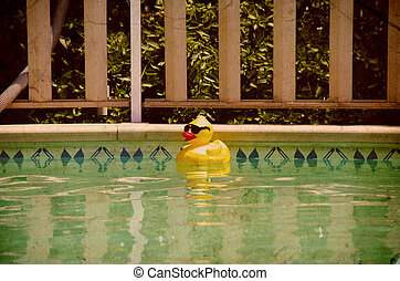 Rubberduck in a Pool - 1960s Style Photo of a Rubberduck in ...