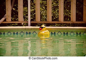Rubberduck in a Pool