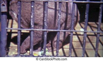 1968: Scenes of caged monkeys - Original vintage 8mm film...
