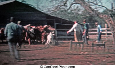1971: Men corralling cattle for the